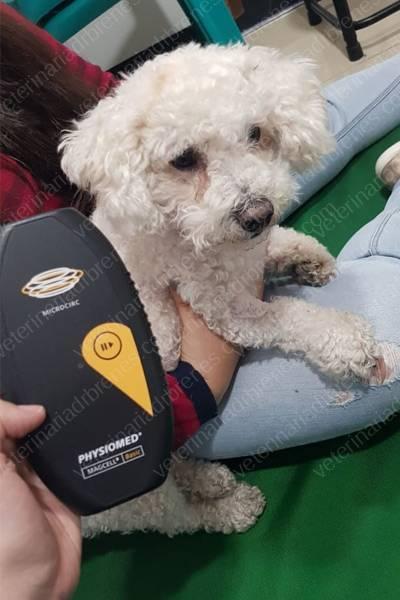 Magnetoterapia para rehabilitar perros