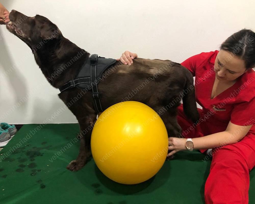 Fisioterapia y Rehabilitación Canina